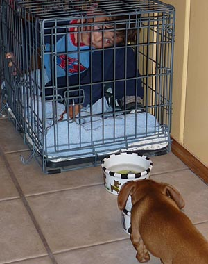 little-human-in-the-dachshund-crate