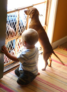 sampson-the-mini-dachshund-with-caden-the-baby-giant