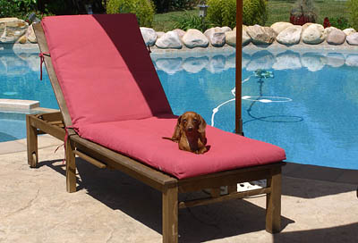sampson-the-dachsund-on-lounge-chair-by-the-pool