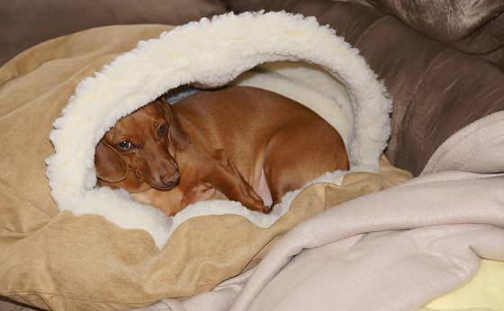 cozy-cave-dachshund-bed
