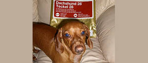 My Favorite Dachshund Dry Food