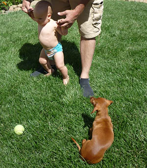 Dachshund Puzzled about Children
