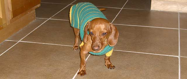 Dachshunds Can Keep You Safe