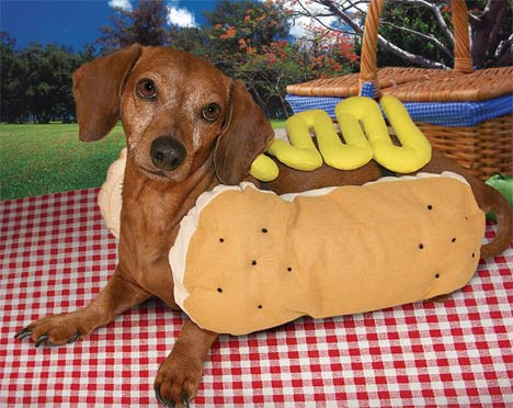 Where Did The Name Hot Dog Come From?